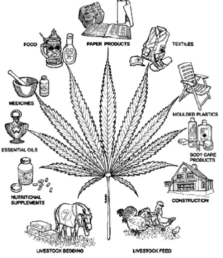 information essay on weed Marijuana refers to a drug derived from dried leaves, stems, and flowers of the  cannabis plant cannabis sativa, as it is known scientifically,.